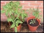 Ken_Plants1